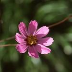 小紅花..攝於2006.11.25..福壽山上..