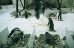 企鵝孵蛋..